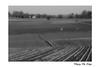 Après la moisson / After the harvest (Thierry De Neys - Photographies) Tags: oogst harvest thierrydeneys belgique belgium belgïe champ field maïs veld corn ligne courbe line curve lijn nb bw noiretblanc blackandwhite paysage landscape landschap vache cow coe horizon