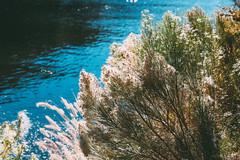 1711 Butcher Jones3 (nooccar) Tags: 1711 dcaphotos arizona devonchristopheradams nov2017 november saguarolake saltriver adventure devoncadamscom outdoors photowalk wanderlust