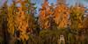 Deer stand in morning light (SM_WZ) Tags: deutschland germany hessen wetterau autumn baum bã¤ume fall forest herbst sonnenaufgang sunrise tree trees wald woodland