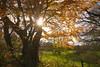 Landschaft bei Breitbrunn (g e g e n l i c h t) Tags: ammersee breitbrunn allee sonnenstern