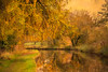 Marbury Canal at Autumn (photoart33) Tags: autumn larch marbury canal reflections layered