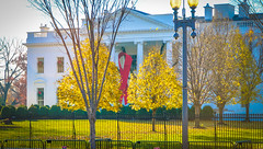 2017.12.01 Red Ribbon at the White House, World AIDS Day, Washington, DC USA 1120
