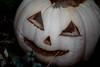 From My Rotting Body (Jules (Instagram = @photo_vamp)) Tags: pumpkin jackolantern rotting stuffinmybackyard november