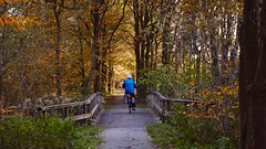 cyclist in the forest (Jos Mecklenfeld) Tags: autumn fall herbst herfst forest wald bos cyclist radfahrer vossenberg terapel westerwolde groningen netherlands niederlande nederland sonya6000 sonyilce6000 selp1650 a6000 ilce6000 nl