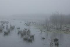 West-Zeeuws-Vlaanderen (wietsej) Tags: westzeeuwsvlaanderen rx10m4 rx10 iv fo fog mist landscape rx10iv