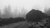 In the fog (Migge88) Tags: nebel fog bau wald ruine stein stone tree forest haus home schwarz und weiss black with kanaren canarias tenerife teneriffa