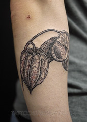 Blackwork Tattoos (tattoosthisway) Tags: plant botanical lanternflower gooseberry tattoo toronto aliek blackwork etchy woodblock scrimshaw tattoosthisway best