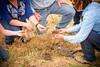 5582_NRCS_projects.jpg (NRCS Montana) Tags: people rancher farmer soilhealth balegrazing