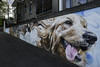Mural - Animal Medical Centre - Launceston (on the water photography) Tags: mural animal medical centre launceston josh foley street art artist