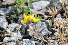 Blume (knud_demantowsky) Tags: rømø röm denmark dänemark blume flower steine stone makro macro tamronsp150600mmf563divcusda011