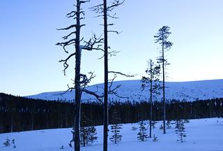 Happy 100th birthday, Finland! 💙