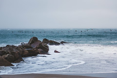 Pelicans in Flight (ashercurri) Tags: ocean water atlantic pelican sony nex nex7