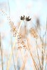 death becomes us, my dahling (courtney065) Tags: nikond800 nature landscapes foliage grasses wetlands pondscapes river autumn fall autumnfoliage flora artistic depthoffield blurred abstract highkey peaceful serene painterly serenitynow