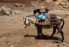 0621 (HerryB) Tags: morocco maroc maghreb nordafrika afrika africa afrique marokko reise voyage travel sonyalpha77 sonyalpha99 tamron alpha sony bechen heribert heribertbechen fotos photos photography herryb 2014 dokumentation documentation beduinen wanderung