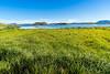 The Greens of Summer (*Capture the Moment*) Tags: 2017 farbdominanz fotowalk himmel iceland island lakemyvatn myvatn seemyvatn sky sonya7m2 sonya7mii sonya7mark2 sonya7ii sonyfe2470mmf4zaoss sonyilce7m2 water blau blue green grün wasser
