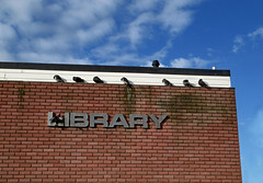 Pigeon library  314/365