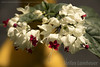 Flores (Stefan Lambauer) Tags: flowers macro flores santos sãopaulo stefanlambauer brasil brazil 2017 br
