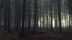 A Light in the Dark (Netsrak) Tags: eu europa europe forst natur nebel wald fog forest mist nature woods baum bäume