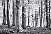 Welcome to the Woods... (Ody on the mount) Tags: anlässe bäume fototour olympus pen pflanzen schwäbischealb strukturen wald bw monochrome sw germany