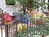Fences in Brooklyn, New York (soniaadammurray - Off) Tags: digitalphotography fences flowers building garden tree brooklyn newyork hff