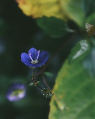 Nature Photography (danoial) Tags: flower garden blue tiny mood vsco flowers nature gardens