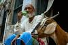 _DSC5286 (prduval5067) Tags: india varanasi man goat tea chai portrait streetphotography