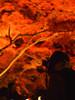 take a photo of taking a photo No.10 (matsugoro) Tags: olympus pen digital epl2 nagatoro chichibu saitama night nature autumn autumnleaves leaf leaves red silhouette