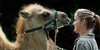 Talking to you (ARRRRT) Tags: arrrrt iamtalkingtoyou camel