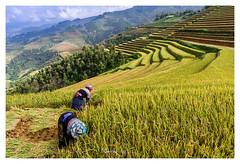 xNGO6320 (Ngoc.Vu) Tags: lapántẩn yênbái vietnam vn