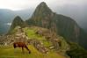 Lama @ Machu Picchu (PHOTOGRAFIEBER) Tags: southamerica südamerika backpacking bolivia peru chile adventure machupicchu machu picchu myth inka inca ruin