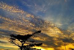 Golden cloud (jonathanzhong1) Tags:
