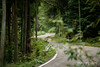 Through the forest (Pablo Arrigoni) Tags: japón japan japanese asia forest bosque ruta road green verde tree arbol arboles sign letrero cartel señal trip viaje daylight day outside outdoor taniai canon eos eos70d 18135 nature naturaleza color colors colores