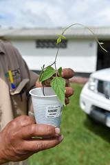 NP-seed regeneration Popayan 2