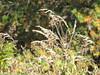 Seney National Wildlife Refuge (JJP in CRW) Tags: whitefishpoint michigan upperpeninsula