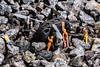 MacroMondays - StoneRhymingZone (Flemming Andersen) Tags: stone rhyming zone jelling regionofsoutherndenmark denmark dk mondays crash men macromondays stonerhymingzone drone repair
