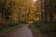 Dutch autumn forest (STEHOUWER AND RECIO) Tags: dutch autumn forest path vrijenburgerbos netherlands holland nederland herfst herbst taglagas perspective fall colours leaves nature woods natuur flora floral tree trees season photo photography capture image