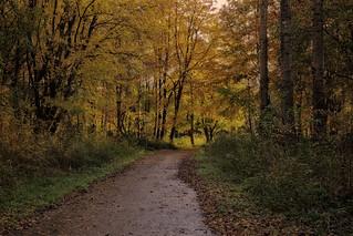 Dutch autumn forest