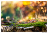 (Bogdan_b) Tags: sony a99 135mm zeiss bokeh forest trees autumn sonnar13518za sonnart18135 nature macro amount