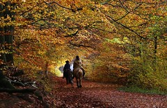 Sunday things (annazelei) Tags: animal tree forest people path autumn november outdoor down canon eos fall natura nature natural day colour colorful lady place hobby walking ride riding horse perspective foliage railroad scenery countryside sundaylights trees yellow red