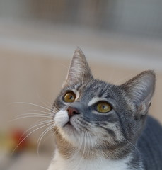 5Ds_Bella_74c (Stray cats photos) Tags: