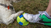 My Football Coach (RissaJT_23) Tags: dog football soccer sport jackrussellterrier jackrussell jrt canon canon6d canon2470mm petphotography friendship ball training games
