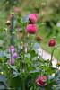 DSC_6911 (facebook.com/DorotaOstrowskaFoto) Tags: ogródbotaniczny kwiaty