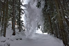 Attention avalanche (marie du vercors) Tags: neige snow hiver winter avalanche forêt forest vercors alpes