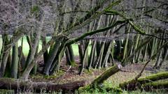 Bäume (wernerfunk) Tags: baum landschaft tierpark hessen