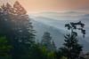 Drive up to Clingman's Dome - GSMNP (Andrea Garza ~) Tags: gsmnp smokies greatsmokymountainsnationalpark smokymountains tennessee tn sunrise dawn mountains usa travel nationalpark clingmansdome pinetrees pink layers mountain fog