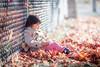 Snug (michaelinvan) Tags: fence sunlight girl autumn canon primelense 135mm f2 5dmk2 maple leaves