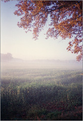 Novembermorgen II (Ulla M.) Tags: upright hochformat november nebel fog bäume trees olympusxa selfdeveloped selbstentwickelt 35mm kleinbild reflectaproscan10t umphotoart dorsten rangefinder analog analogue