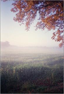 Novembermorgen II