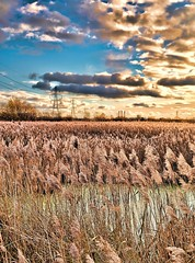 RyeMeadsNo13 - Copy (iankellybn26dj) Tags: landscape uk england rye meads rspb light photo wetlands nature river sky marshes reeds autumn fall colour color