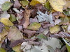 2017-11-09-12006 (vale 83) Tags: autumn leaves nokia n8 friends autofocus colourartaward coloursplosion